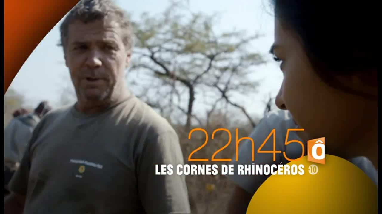 Investigations Les cornes de rhinocéros - 18 octobre