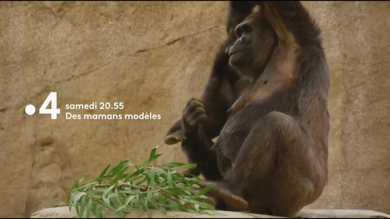 Des maman modèles - 26 mai